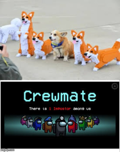 CORGI IMPOSTER | image tagged in white background | made w/ Imgflip meme maker