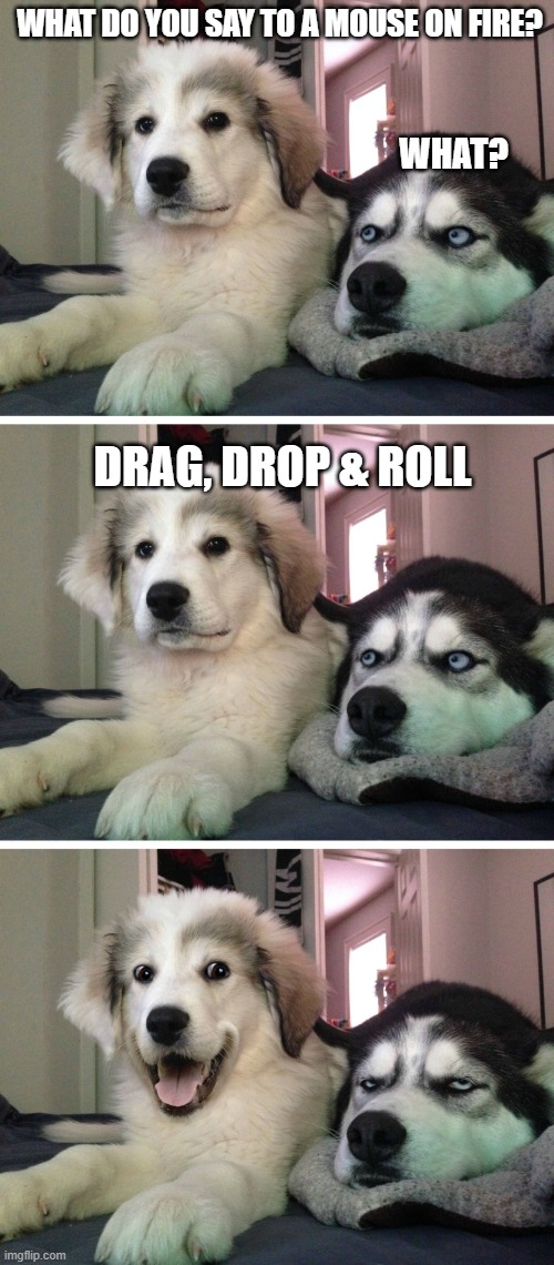 Bad pun dogs |  WHAT DO YOU SAY TO A MOUSE ON FIRE? WHAT? DRAG, DROP & ROLL | image tagged in bad pun dogs | made w/ Imgflip meme maker