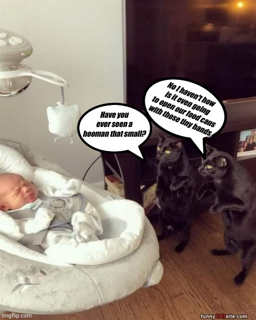 New cat slave in training |  No I haven't how is it even going to open our food cans with those tiny hands; Have you ever seen a hooman that small? | image tagged in black cat,oh no black cat,funny cat memes | made w/ Imgflip meme maker