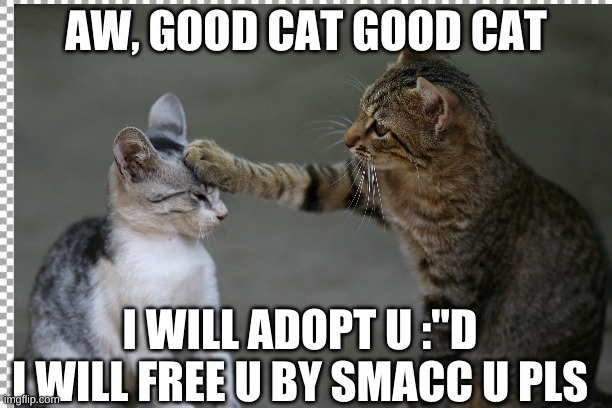 "AW, GOOD CAT GOOD CAT; I WILL ADOPT U :""D I WILL FREE U BY SMACC U PLS 