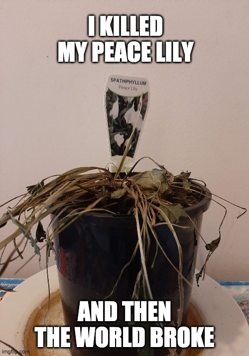 Give peace a chance |  I KILLED MY PEACE LILY; AND THEN THE WORLD BROKE | image tagged in peace,green thumb,peace lily,trump,world peace,sorry | made w/ Imgflip meme maker
