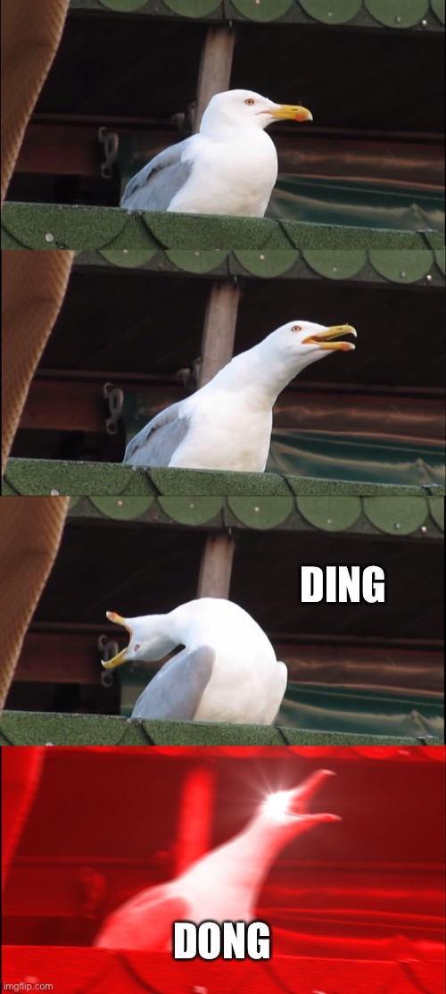 Inhaling Seagull Meme | DING DONG | image tagged in memes,inhaling seagull | made w/ Imgflip meme maker