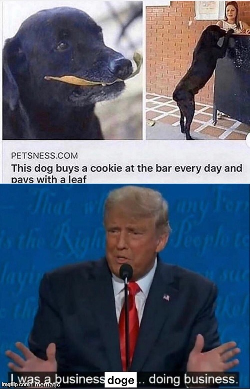 Business Doge | image tagged in business,doge,cookie,trump | made w/ Imgflip meme maker