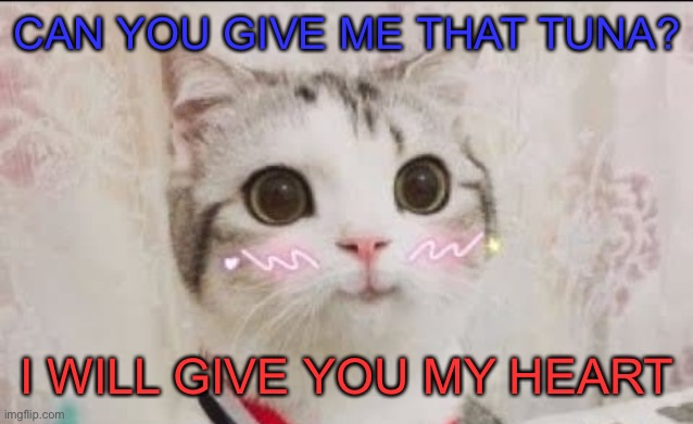 Cute cat :3 |  CAN YOU GIVE ME THAT TUNA? I WILL GIVE YOU MY HEART | image tagged in cute cat uwu,cat,cute,meow | made w/ Imgflip meme maker