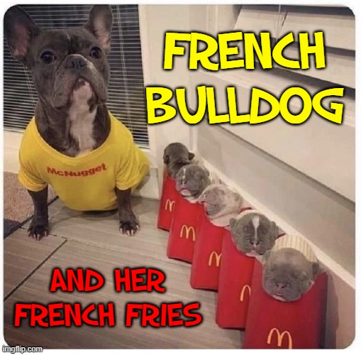 Awwww... puppies! |  FRENCH BULLDOG; AND HER FRENCH FRIES | image tagged in vince vance,mcdonald's,french fries,french bulldog,puppies,memes | made w/ Imgflip meme maker
