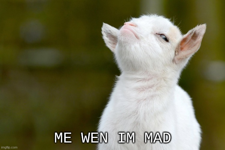 ME WEN IM MAD | image tagged in proud baby goat | made w/ Imgflip meme maker
