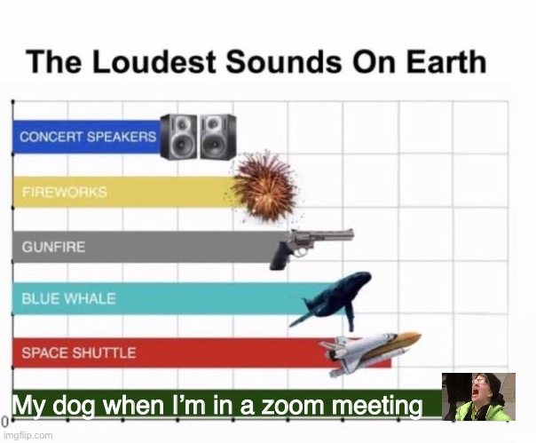 Why does it only happen then? |  My dog when I'm in a zoom meeting | image tagged in the loudest sounds on earth,coronavirus,dogs,gifs | made w/ Imgflip meme maker