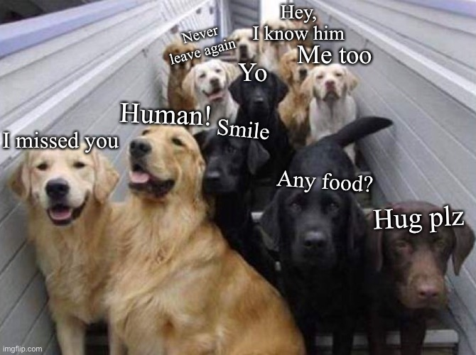 POV: these are your doggos |  Hey, I know him; Never leave again; Me too; Yo; Human! Smile; I missed you; Any food? Hug plz | image tagged in doggo,doggos,dogs,dog,animals,animal meme | made w/ Imgflip meme maker