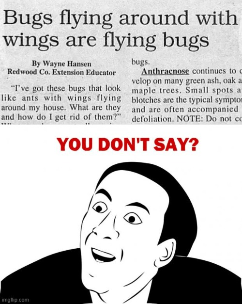 I think at this point they are winging it | image tagged in memes,you don't say,headline,duh | made w/ Imgflip meme maker