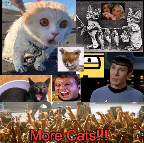 More cats please |  More Cats!!! | image tagged in cat cats,feline,meow,fur ball,tail,thursday | made w/ Imgflip meme maker