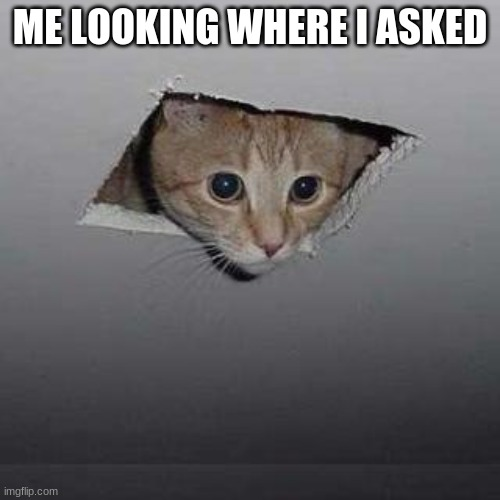 Ceiling Cat |  ME LOOKING WHERE I ASKED | image tagged in memes,ceiling cat | made w/ Imgflip meme maker
