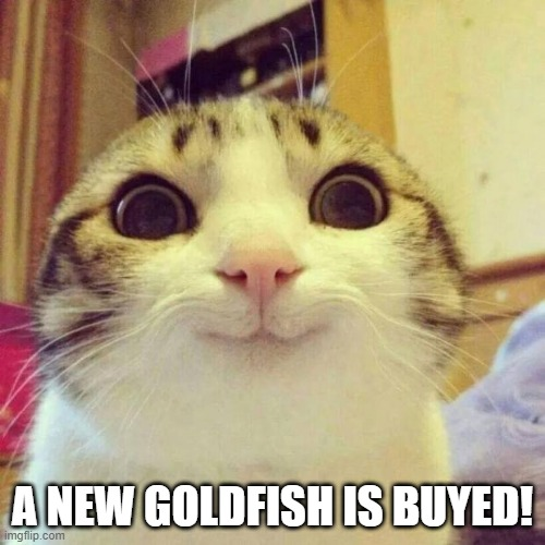 Delicious dinner! |  A NEW GOLDFISH IS BUYED! | image tagged in memes,smiling cat | made w/ Imgflip meme maker
