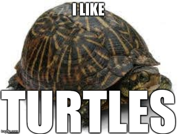 I like TURTLES |  I LIKE; TURTLES | image tagged in turtle | made w/ Imgflip meme maker