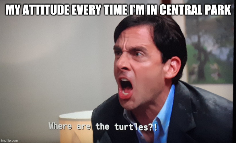 Turtle Enthusiasts MUST turtle |  MY ATTITUDE EVERY TIME I'M IN CENTRAL PARK | image tagged in where are the turtles,turtle | made w/ Imgflip meme maker
