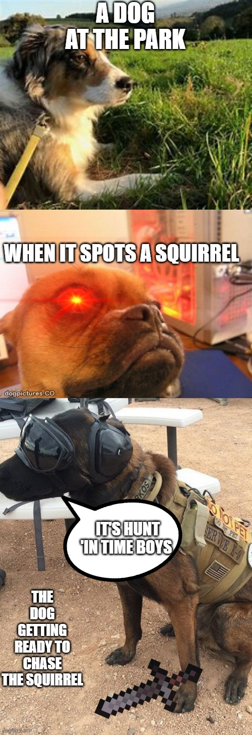 Dogs |  A DOG AT THE PARK; WHEN IT SPOTS A SQUIRREL; IT'S HUNT 'IN TIME BOYS; THE DOG GETTING READY TO CHASE THE SQUIRREL | image tagged in dogs,crazy | made w/ Imgflip meme maker