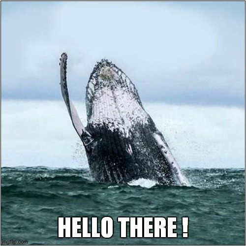 Waving Not Drowning |  HELLO THERE ! | image tagged in whale,waving | made w/ Imgflip meme maker