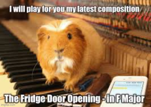 guinea pig | image tagged in guinea pig,cute,memes,funny,piano | made w/ Imgflip meme maker