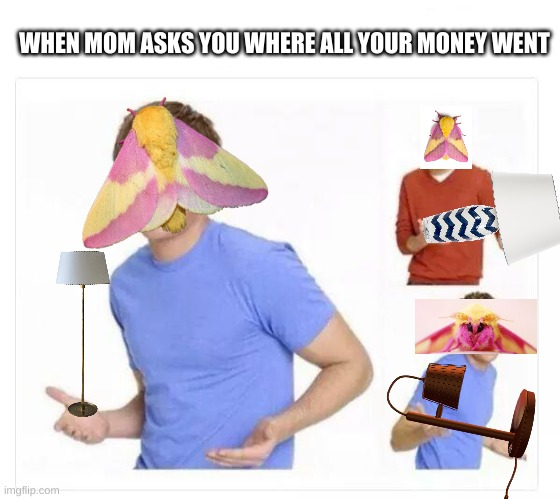 moth |  WHEN MOM ASKS YOU WHERE ALL YOUR MONEY WENT | image tagged in lamp,moth | made w/ Imgflip meme maker