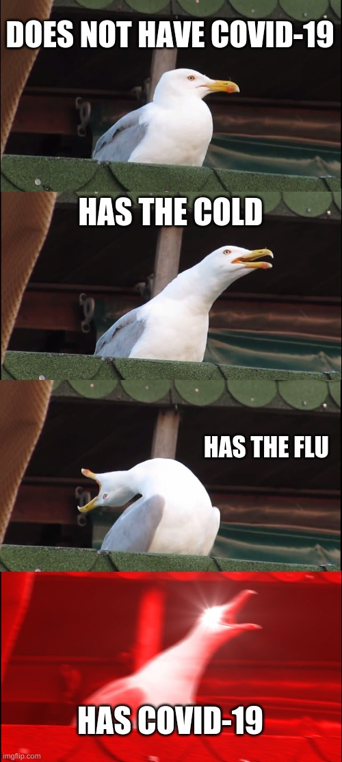 Everybody I'm begging you to STAY HOME |  DOES NOT HAVE COVID-19; HAS THE COLD; HAS THE FLU; HAS COVID-19 | image tagged in memes,inhaling seagull | made w/ Imgflip meme maker