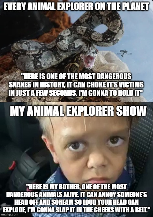 "my animal explorer show |  EVERY ANIMAL EXPLORER ON THE PLANET; ""HERE IS ONE OF THE MOST DANGEROUS SNAKES IN HISTORY, IT CAN CHOKE IT'S VICTIMS IN JUST A FEW SECONDS, I'M GONNA TO HOLD IT""; MY ANIMAL EXPLORER SHOW; ""HERE IS MY BOTHER, ONE OF THE MOST DANGEROUS ANIMALS ALIVE. IT CAN ANNOY SOMEONE'S HEAD OFF AND SCREAM SO LOUD YOUR HEAD CAN EXPLODE, I'M GONNA SLAP IT IN THE CHEEKS WITH A BELT."" 