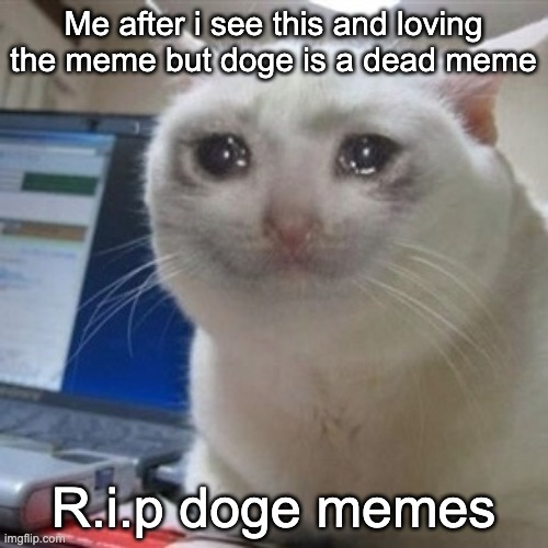 Crying cat | Me after i see this and loving the meme but doge is a dead meme R.i.p doge memes | image tagged in crying cat | made w/ Imgflip meme maker