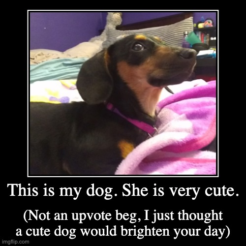My dog | This is my dog. She is very cute. | (Not an upvote beg, I just thought a cute dog would brighten your day) | image tagged in funny,demotivationals | made w/ Imgflip demotivational maker