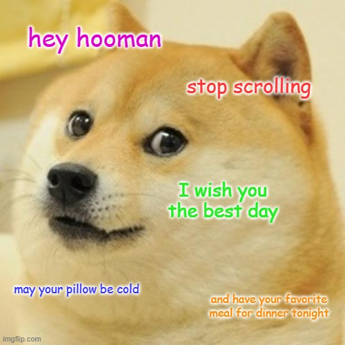 have a good day -doge |  hey hooman; stop scrolling; I wish you the best day; may your pillow be cold; and have your favorite meal for dinner tonight | image tagged in memes,doge | made w/ Imgflip meme maker