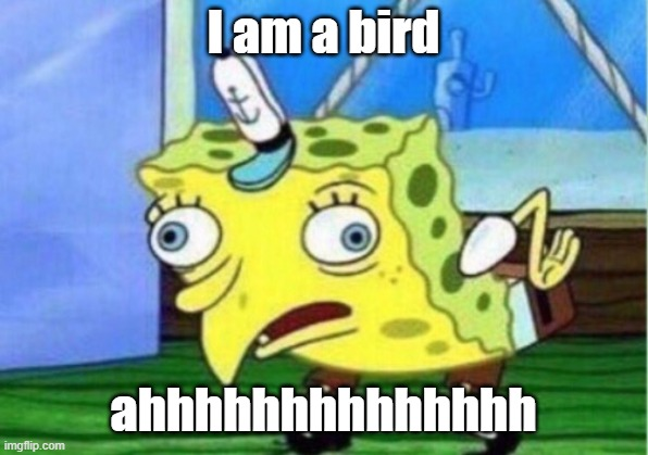 Bird |  I am a bird; ahhhhhhhhhhhhhh | image tagged in memes,mocking spongebob | made w/ Imgflip meme maker