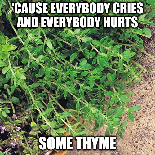 'CAUSE EVERYBODY CRIES AND EVERYBODY HURTS; SOME THYME | image tagged in humor,rem,puns,misheard lyrics | made w/ Imgflip meme maker