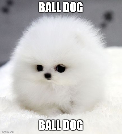 ball dog |  BALL DOG; BALL DOG | image tagged in dogs,cute,cute puppies | made w/ Imgflip meme maker