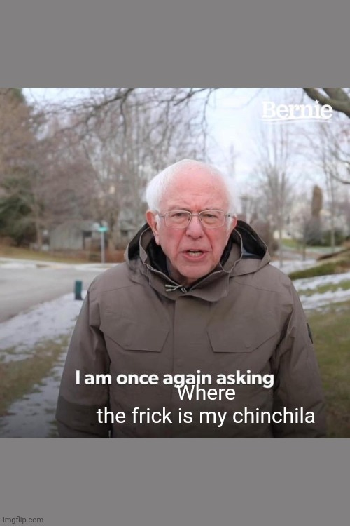 Bernie I Am Once Again Asking For Your Support Meme |  Where the frick is my chinchila | image tagged in memes,bernie i am once again asking for your support | made w/ Imgflip meme maker
