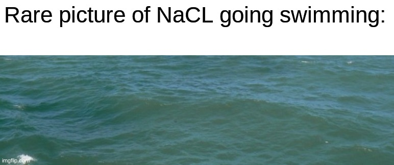 Rare picture of NaCL going swimming: | made w/ Imgflip meme maker