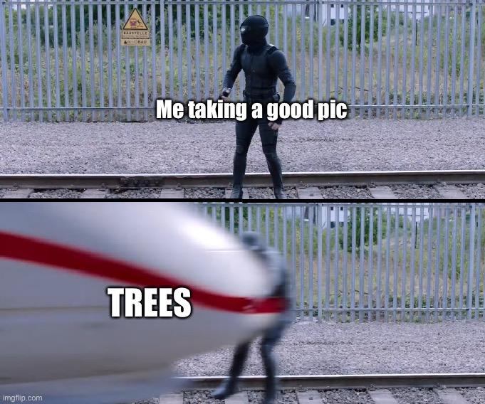 Trees |  Me taking a good pic; TREES | image tagged in hit by train | made w/ Imgflip meme maker