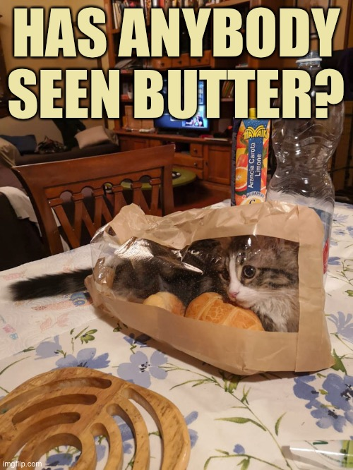 Here Kitty-Kitty-Kitty... |  HAS ANYBODY SEEN BUTTER? | image tagged in funny memes,funny cat memes,funny,cats,funny cats | made w/ Imgflip meme maker