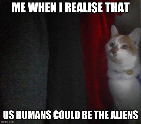 I AM CAT MAN |  ME WHEN I REALISE THAT; US HUMANS COULD BE THE ALIENS | image tagged in i am cat man | made w/ Imgflip meme maker