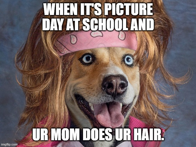 Picture day! |  WHEN IT'S PICTURE DAY AT SCHOOL AND; UR MOM DOES UR HAIR. | image tagged in funnydog | made w/ Imgflip meme maker