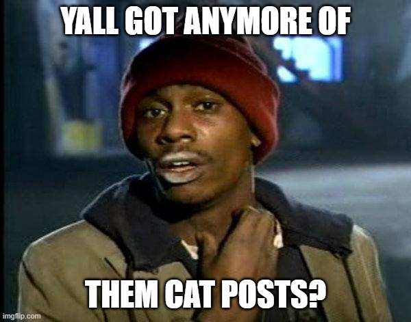 dave chappelle |  YALL GOT ANYMORE OF; THEM CAT POSTS? | image tagged in dave chappelle | made w/ Imgflip meme maker