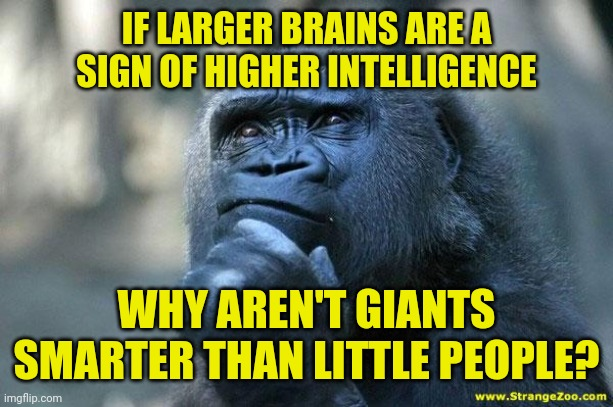 If larger brain size is a sign of higher intelligence why aren't giants smarter than little people |  IF LARGER BRAINS ARE A SIGN OF HIGHER INTELLIGENCE; WHY AREN'T GIANTS SMARTER THAN LITTLE PEOPLE? | image tagged in deep thoughts,anthropology,funny,meme,memes,funny memes | made w/ Imgflip meme maker