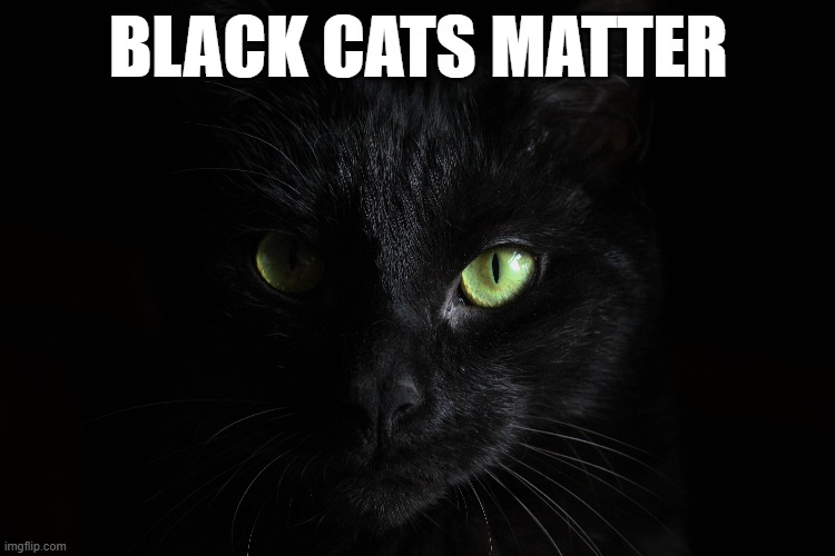 BLM |  BLACK CATS MATTER | image tagged in black cat,oh no black cat | made w/ Imgflip meme maker