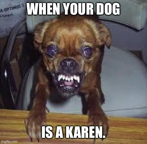 mad dog! |  WHEN YOUR DOG; IS A KAREN. | image tagged in mad dog | made w/ Imgflip meme maker
