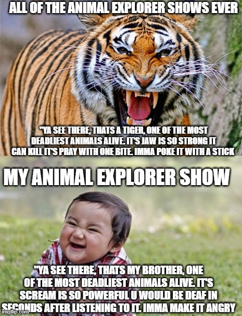"Brother safari |  ALL OF THE ANIMAL EXPLORER SHOWS EVER; ""YA SEE THERE, THATS A TIGER, ONE OF THE MOST DEADLIEST ANIMALS ALIVE. IT'S JAW IS SO STRONG IT CAN KILL IT'S PRAY WITH ONE BITE. IMMA POKE IT WITH A STICK; MY ANIMAL EXPLORER SHOW; ""YA SEE THERE, THATS MY BROTHER, ONE OF THE MOST DEADLIEST ANIMALS ALIVE. IT'S SCREAM IS SO POWERFUL U WOULD BE DEAF IN SECONDS AFTER LISTENING TO IT. IMMA MAKE IT ANGRY 