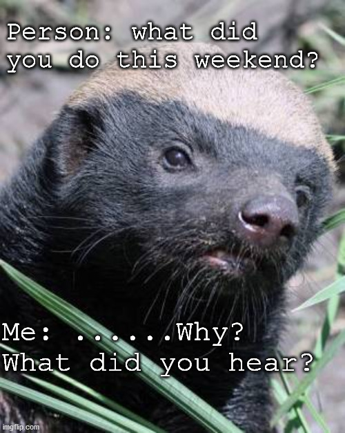 weekend activity |  Person: what did you do this weekend? Me: ......Why? What did you hear? | image tagged in honey badger,weekend | made w/ Imgflip meme maker