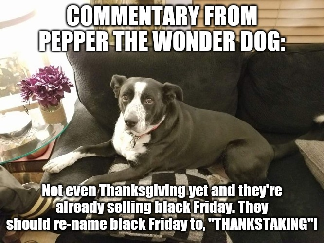 "Commentary from Pepper the wonder dog |  COMMENTARY FROM PEPPER THE WONDER DOG:; Not even Thanksgiving yet and they're already selling black Friday. They should re-name black Friday to, ""THANKSTAKING""! 