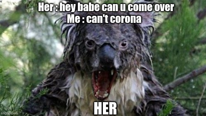 when your girl wants you over |  Her : hey babe can u come over Me : can't corona; HER | image tagged in memes,angry koala | made w/ Imgflip meme maker