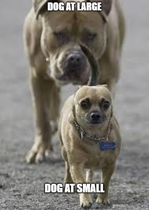 He's Gaining! |  DOG AT LARGE; DOG AT SMALL | image tagged in big dog little dog | made w/ Imgflip meme maker