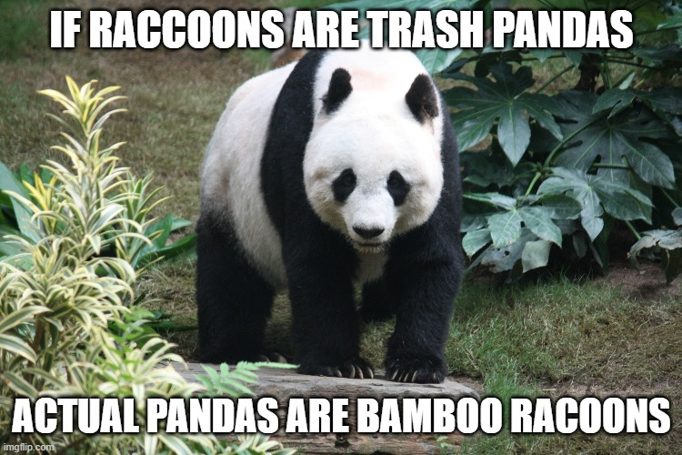 This is now a thing and you can't change my mind |  IF RACCOONS ARE TRASH PANDAS; ACTUAL PANDAS ARE BAMBOO RACOONS | image tagged in memes,animals,pandas,raccoon,trash panda | made w/ Imgflip meme maker
