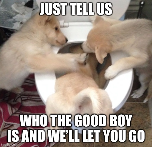 Doggo Waterboarding |  JUST TELL US; WHO THE GOOD BOY IS AND WE'LL LET YOU GO | image tagged in doggo waterboarding,good boy,cute puppies,cute animals,memes,funny | made w/ Imgflip meme maker