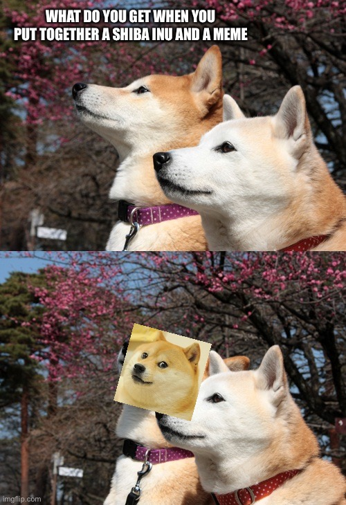 :D |  WHAT DO YOU GET WHEN YOU PUT TOGETHER A SHIBA INU AND A MEME | image tagged in bad pun dogs,why did i make this,lol,bad pun dog,yeet | made w/ Imgflip meme maker