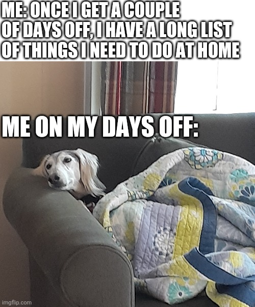 Lazy day off |  ME: ONCE I GET A COUPLE OF DAYS OFF, I HAVE A LONG LIST OF THINGS I NEED TO DO AT HOME; ME ON MY DAYS OFF: | image tagged in lazy dog | made w/ Imgflip meme maker