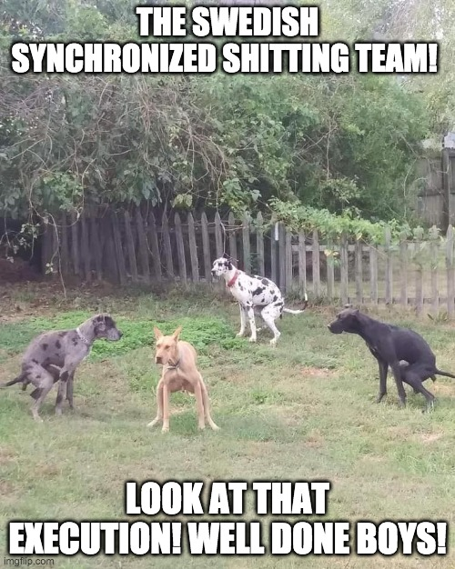 Swedish shitting team |  THE SWEDISH SYNCHRONIZED SHITTING TEAM! LOOK AT THAT EXECUTION! WELL DONE BOYS! | image tagged in dog poop | made w/ Imgflip meme maker
